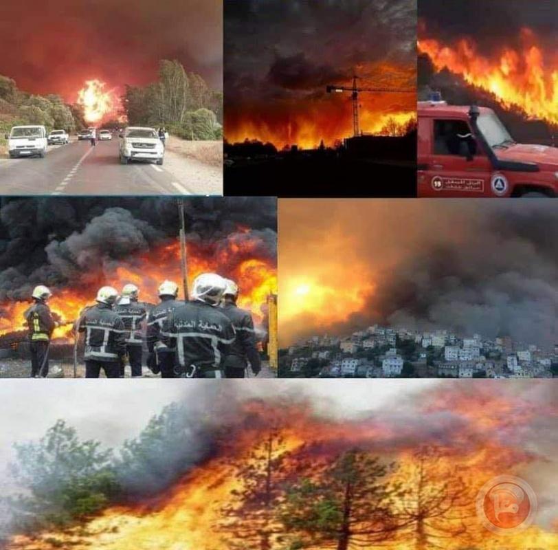 الجزائر.. ارتفاع حصلية ضحايا حرائق الغابات إلى 65 منهم 28 عسكريا
